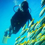 qdt diver with bigeye yellowtail snapper