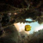 qdt boxfish