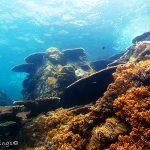 tenggol uw corals