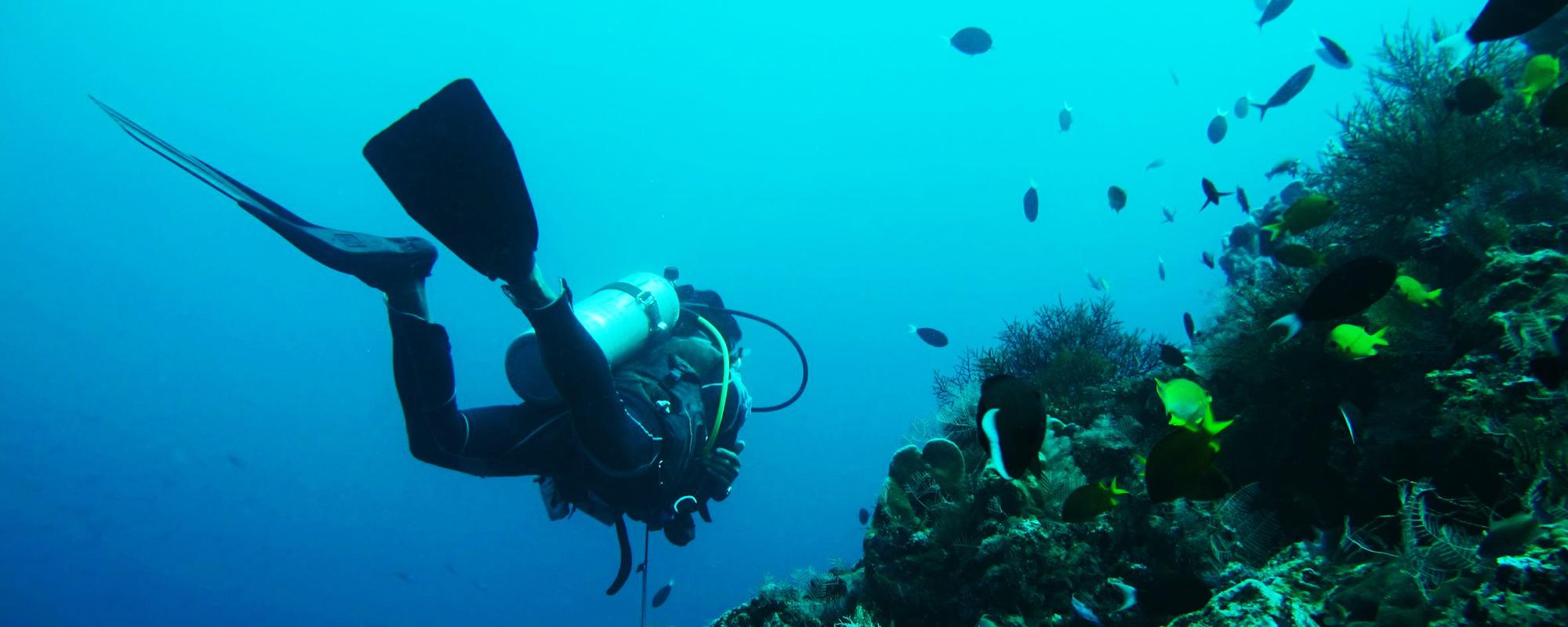 diver corals