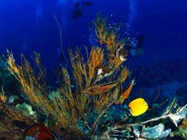 mantabuan coral