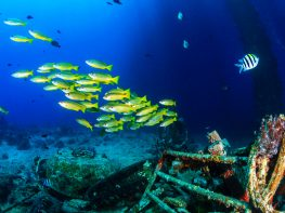 miri wreck diving