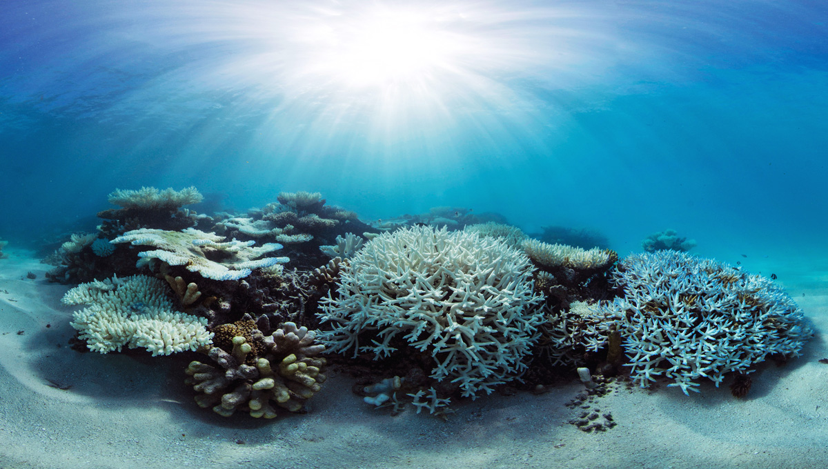 Discover your next dive adventure