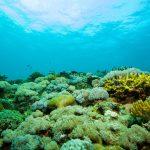 tip of borneo soft coral landscape