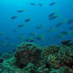 tip of borneo diving landscape