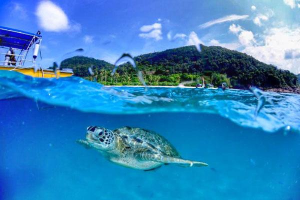 Redang Beach Resort Turtle