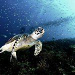 redang beach resort turtle marinescape