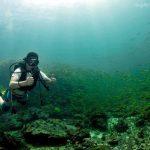 try scuba survivor tiga island diver marinescape
