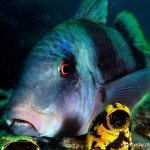 try scuba survivor tiga island uw portrait