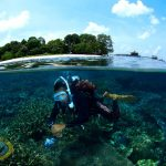 borneo divers coral house reef