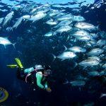 borneo divers underwater scenery