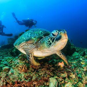 Sea turtle malaysia