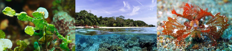 Ambon Indonesia Scubahive