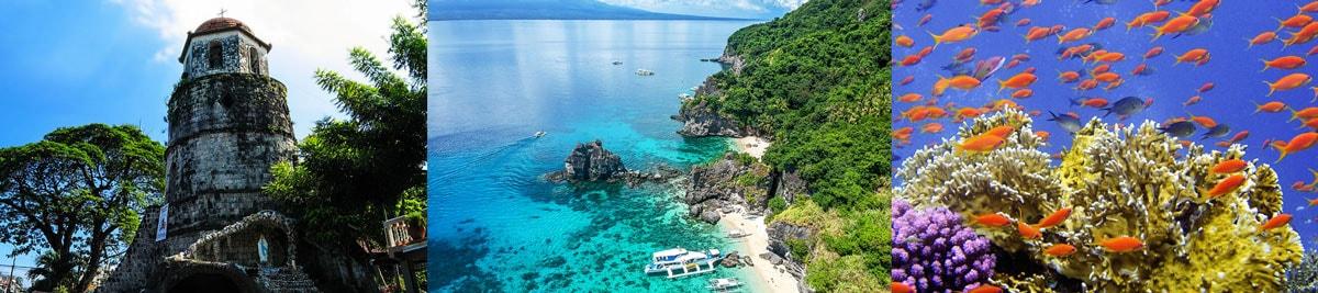 Dumaguete Dauin Philippines Diving