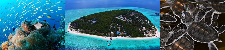 Pom Pom Island Semporna Sabah