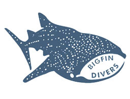 BigFin Divers