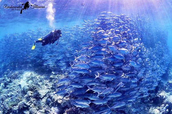 Image credit: Joe Starzz from Underwater Illusions